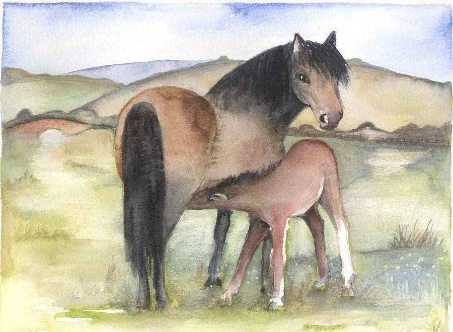 SM:  Horses & Donkeys