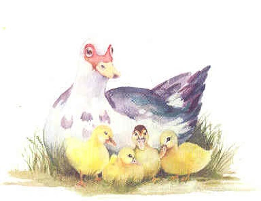 SM:  Birds, Ducks & Chickens