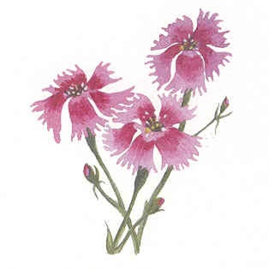 SQ:  Flowers