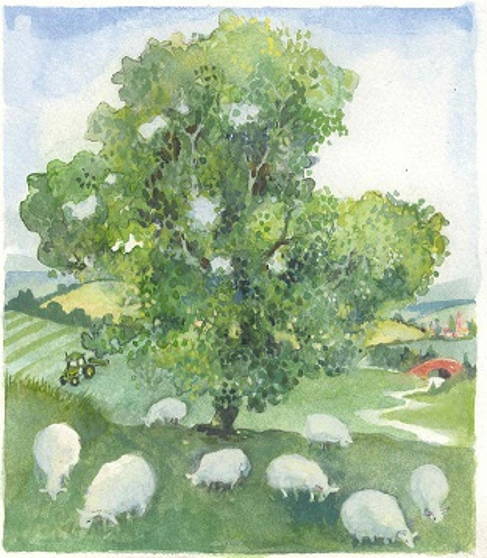 Sheep under tree