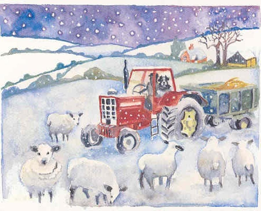 Feeding sheep in the snow