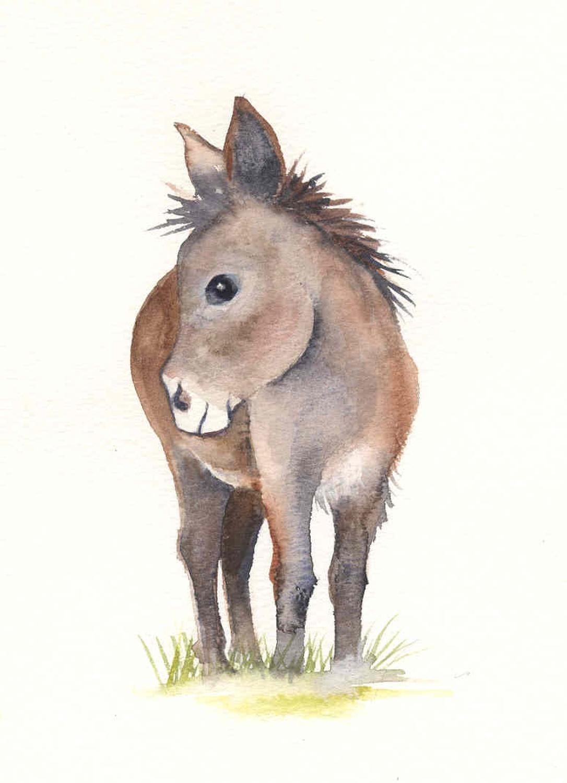 Little brown donkey