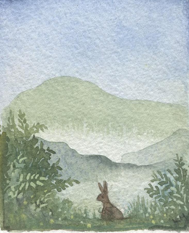 Rabbit in the hills