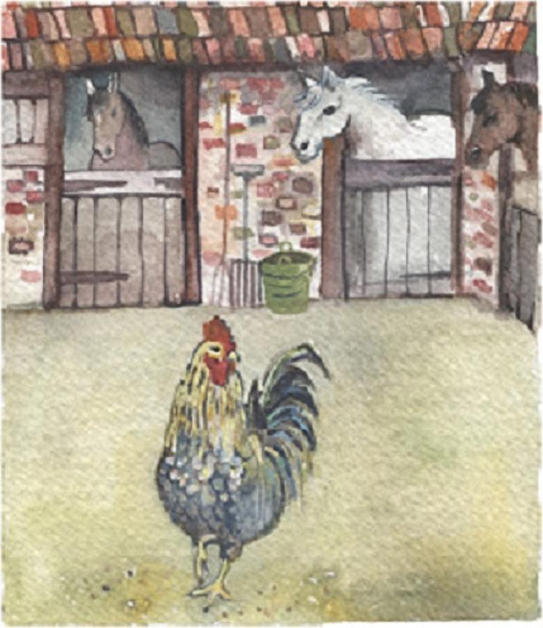 Cockerel in stableyard