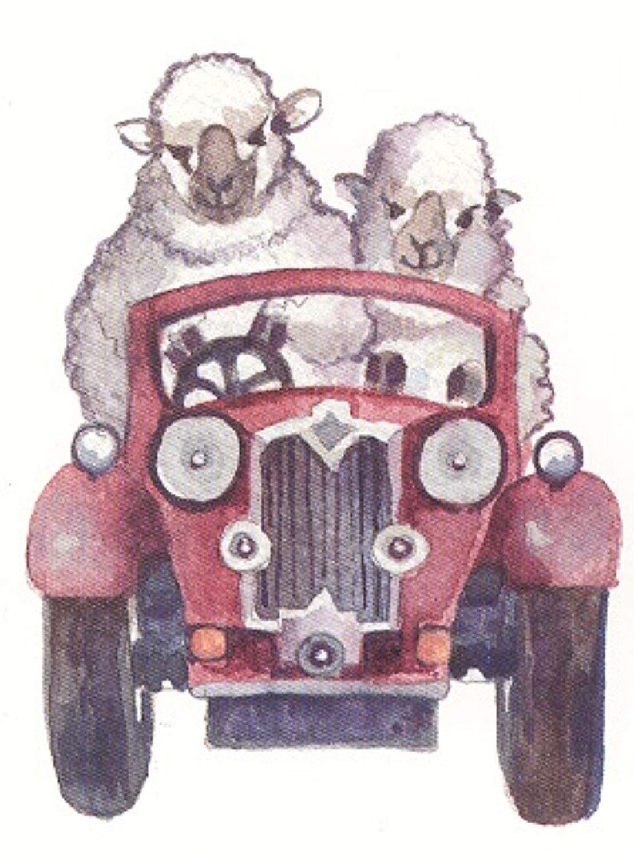 Joy-riding sheep