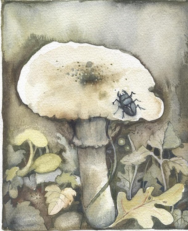 Stag beetle & fungi