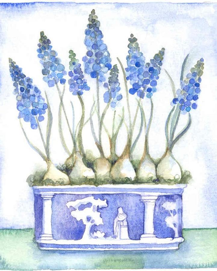Muscari & Wedgewood