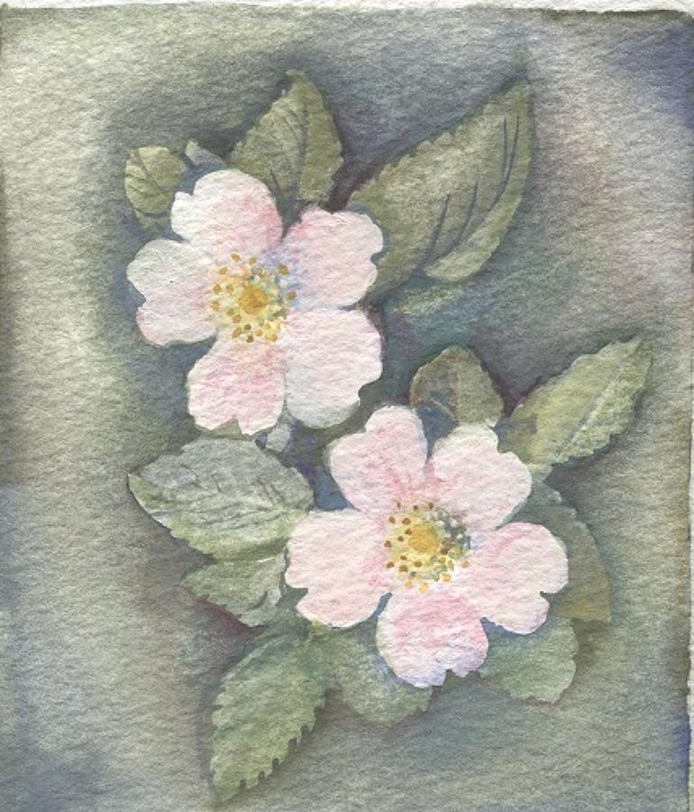 Dog rose
