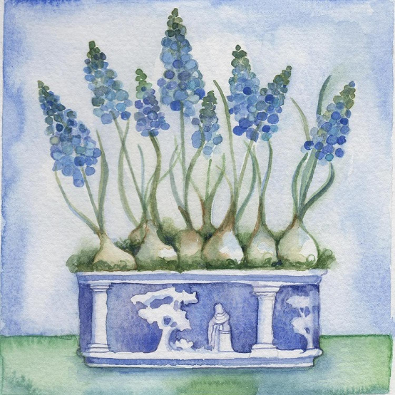 Wedgewood & muscari