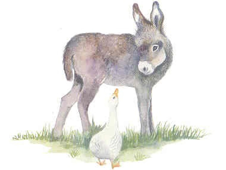Donkey & duck
