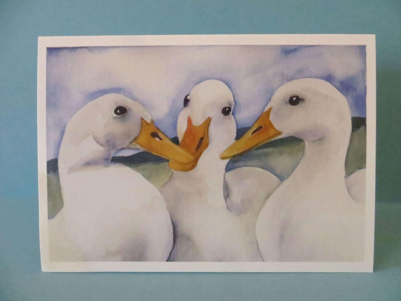 Three ducks discussing