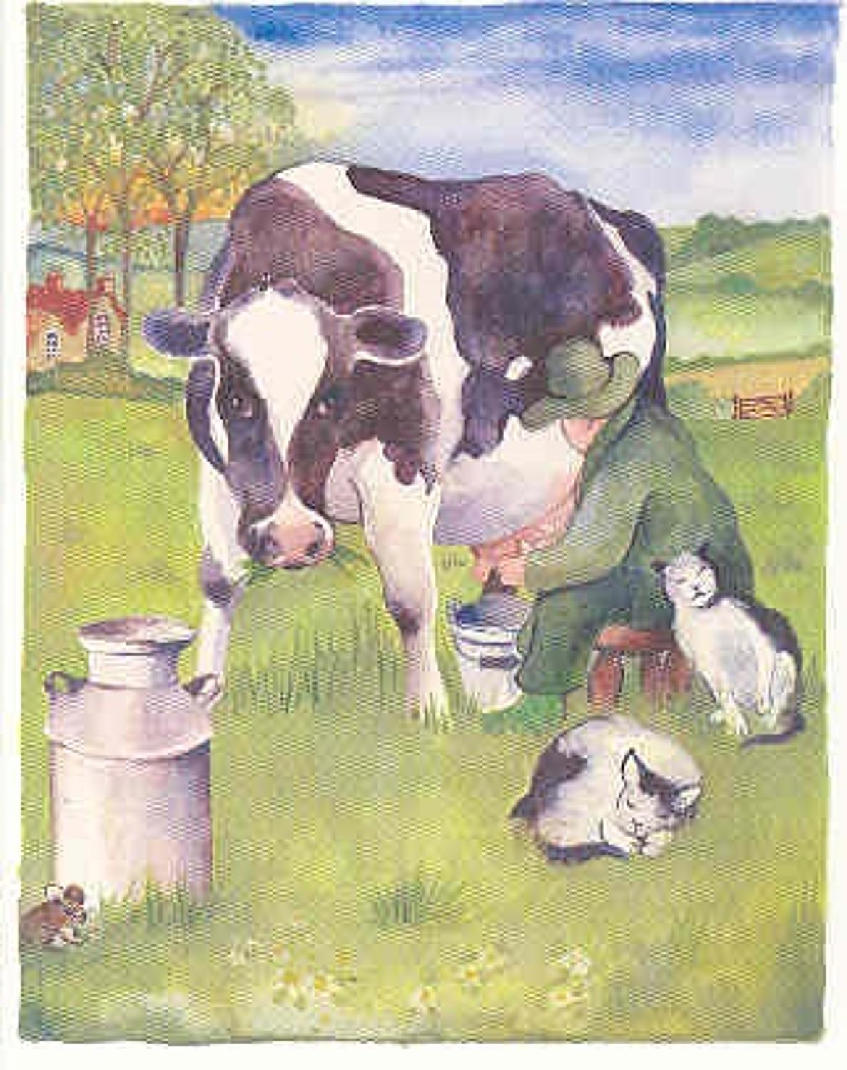 Milking the cow by hand