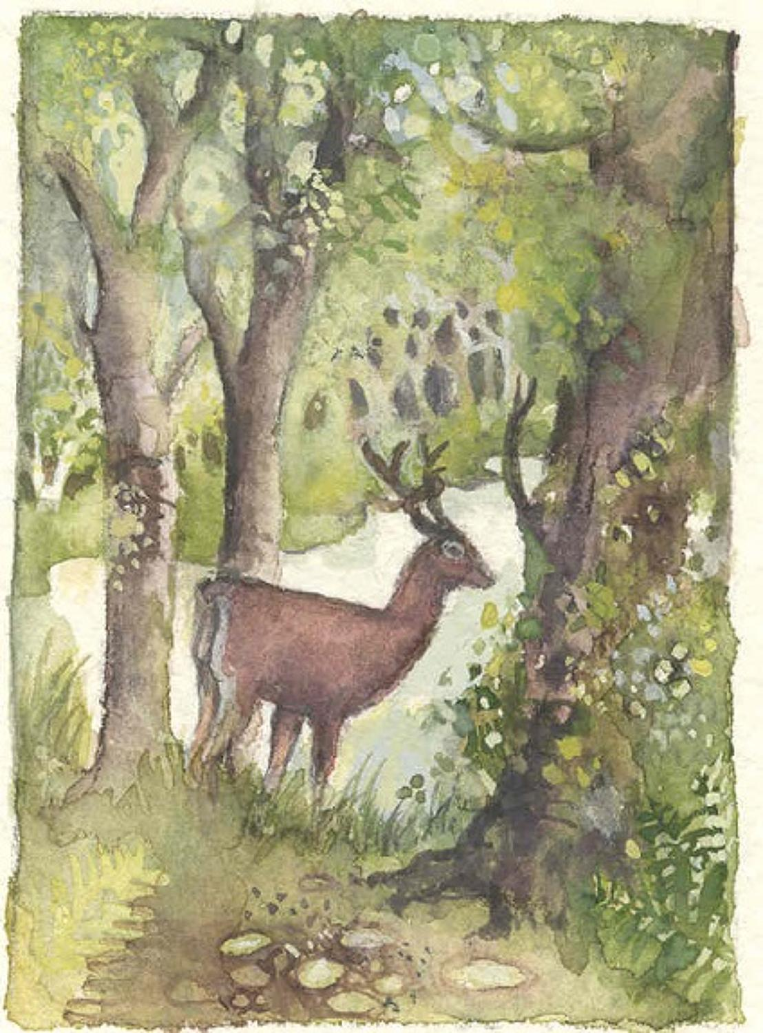 Deer in wood
