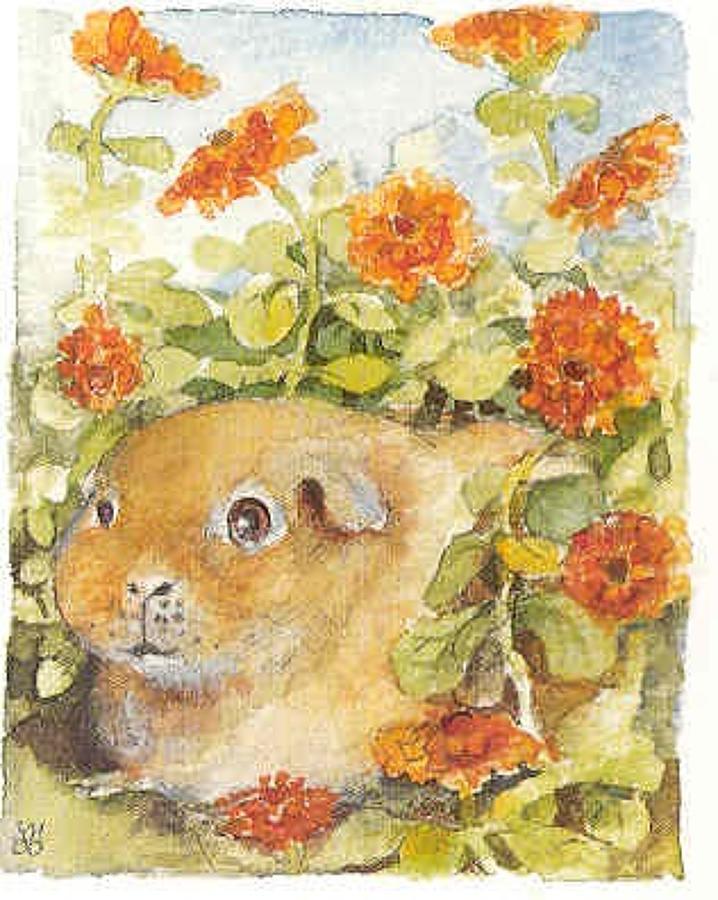 Guinea pig and marigolds