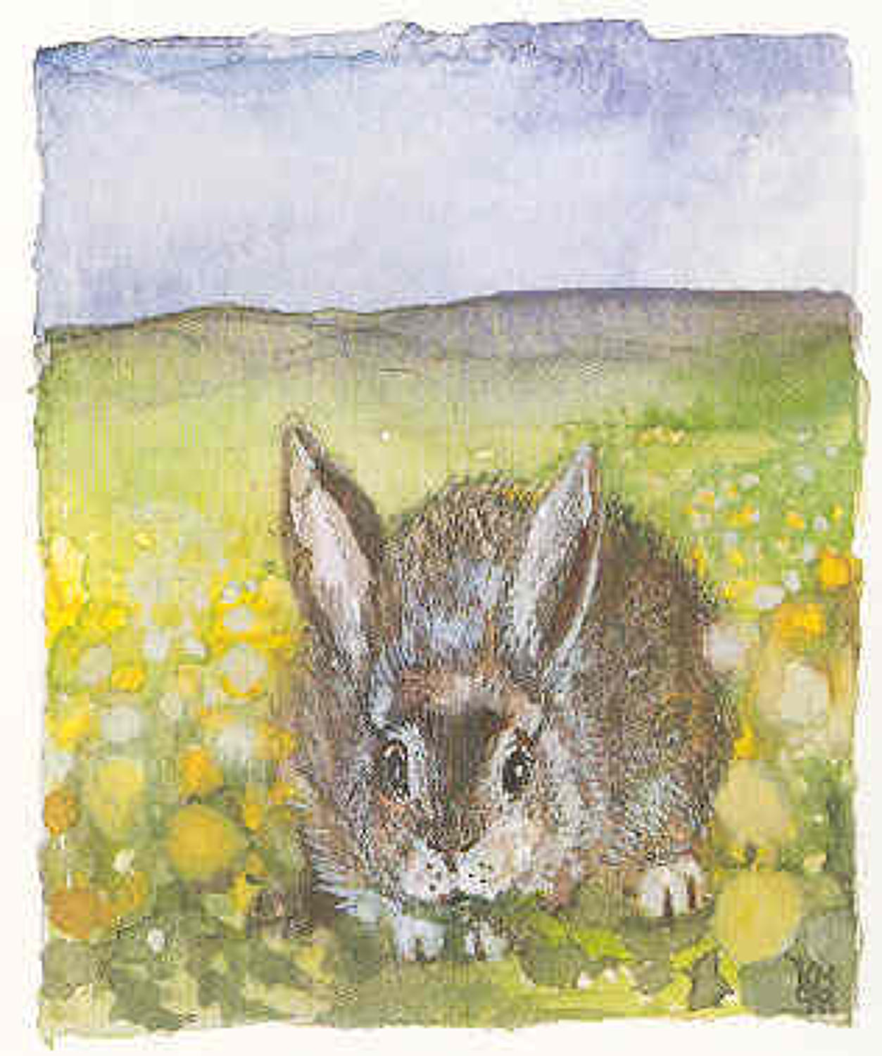 Rabbit in heaven in a field of dandelions
