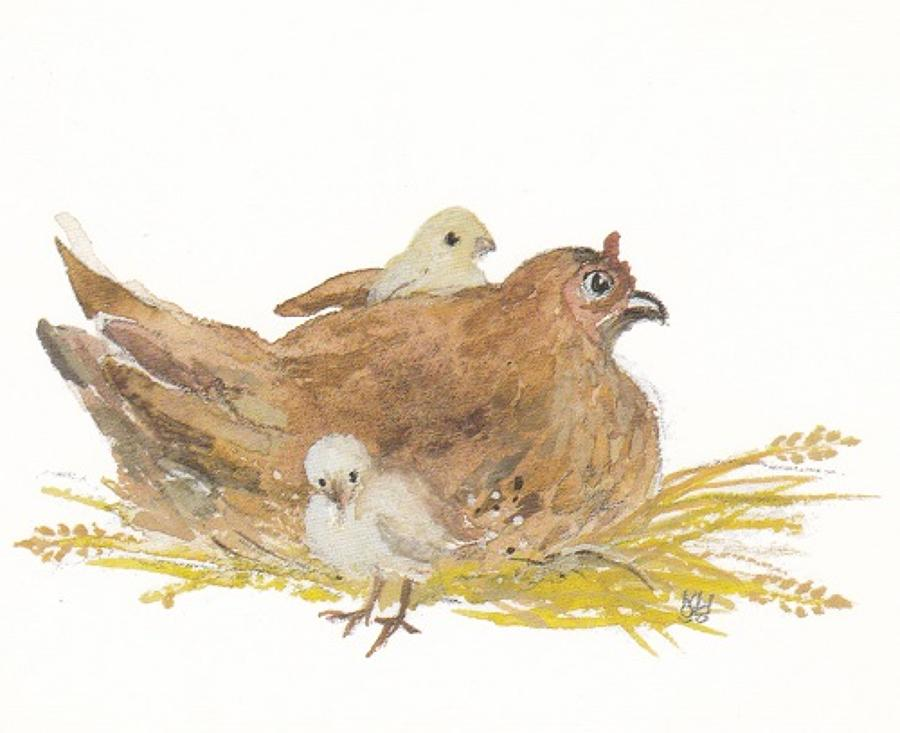 Sitting hen with chicks