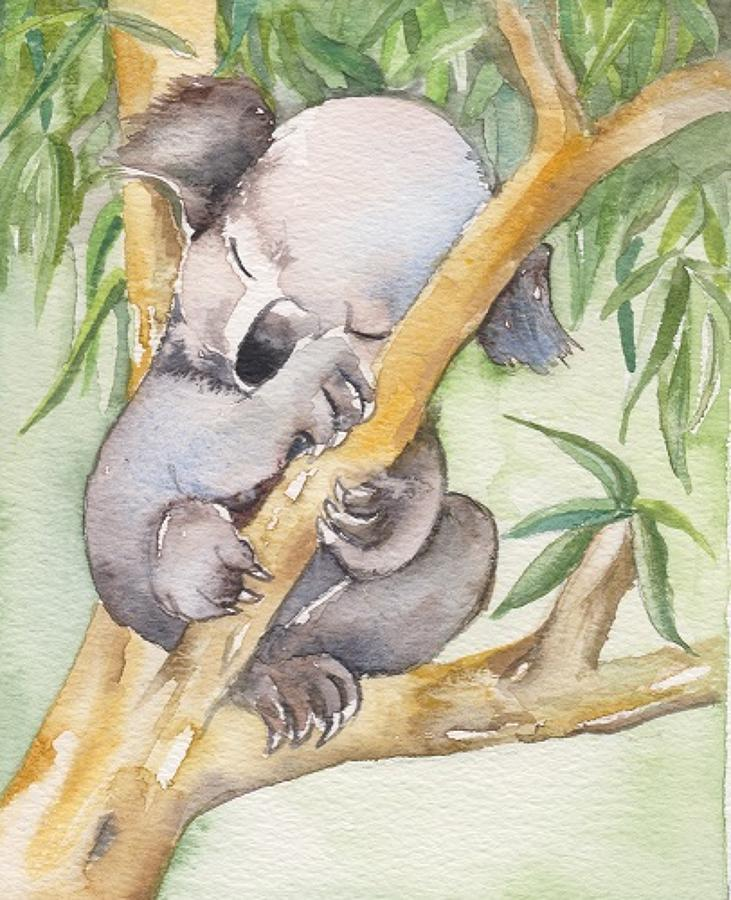 Koala asleep