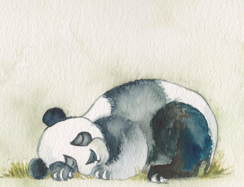 Young panda asleep