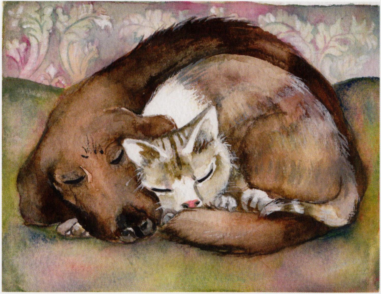 Sleeping cat & dog